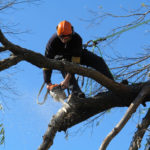 The Importance of Tree Pruning