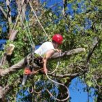 4 Situations When You Need a Professional Tree Trimmer